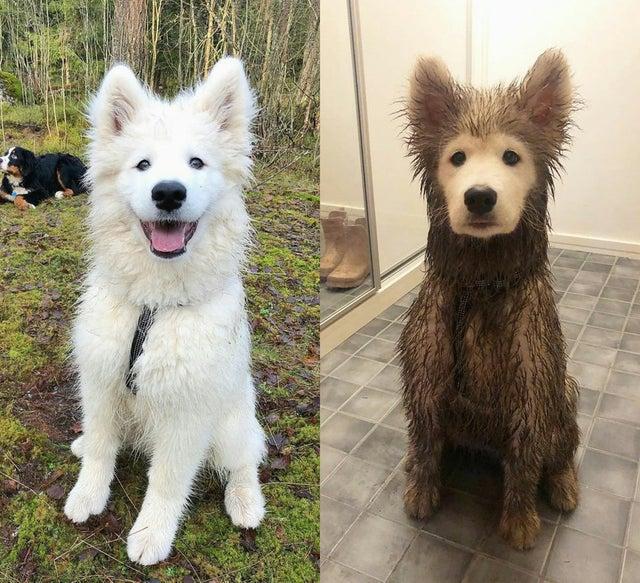 также до и после смешные фото сообщает