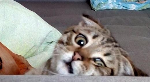 Кот, тебе нормально? Нормально!