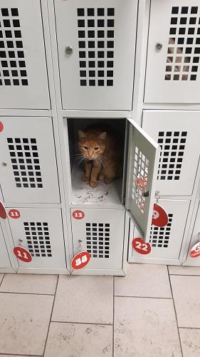 Рыжий кот в камере хранения супермаркета