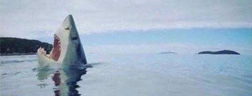 Редкое фото акулы, наступившей на кубик Лего