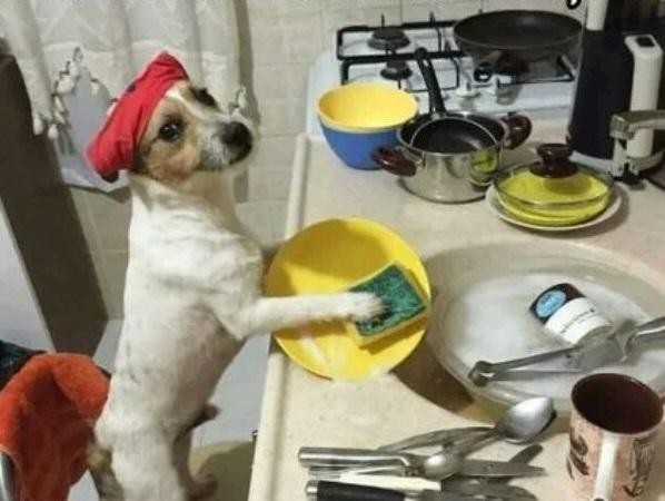 Когда собака услышала разговор о том, что её хотят сбагрить в деревню