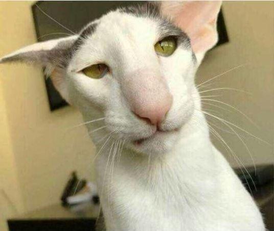 Стрёмный кот от которого все уехали