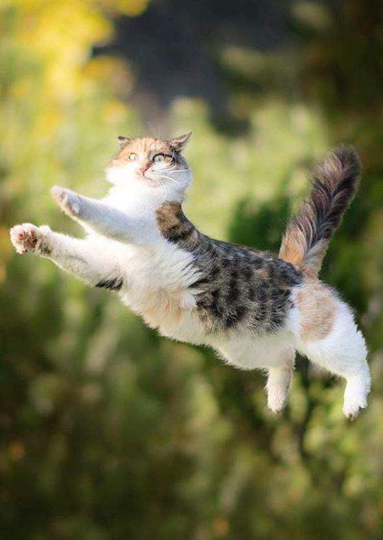 Всё под контролем... и летящий куда-то кот