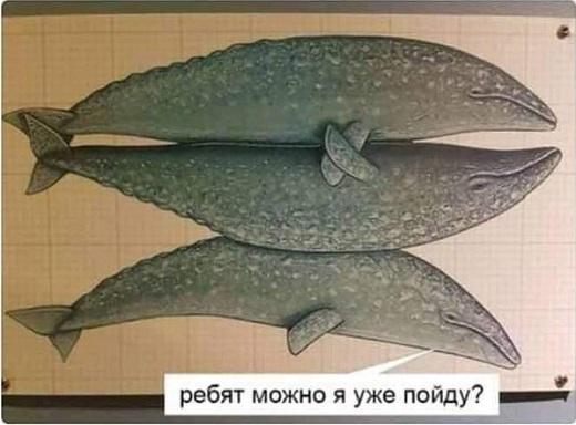 Серые киты и их френдзона.