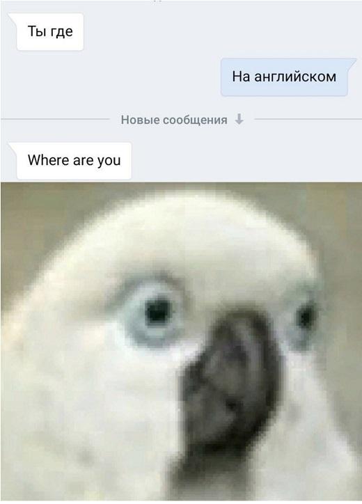 Ты где   На английском   Where are you